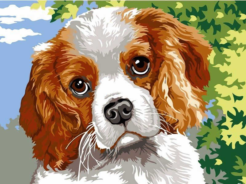 Картинки, собачка с цветами картинки для детей