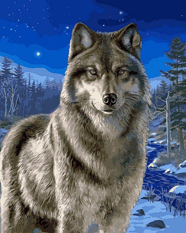 Картинки изображение волка