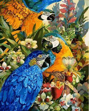 Раскраски по номерам Тропические попугаи - VseTak ...
