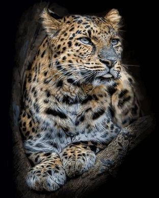 Раскраски по номерам Гордый леопард - VseTak— интернет ...